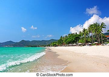 koh samui, chaweng, playa, tailandia, vista