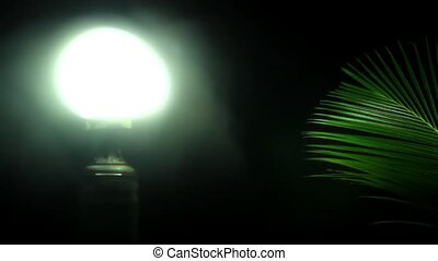 koh samui, noite, disposição, vista, palm., vídeo, céu, lanterna