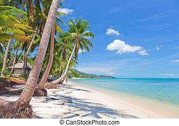 Koh Samui tropical beach and coconut palm trees