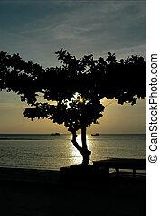 koh, silhouette, navi, albero, due, tailandia, nathon, samui