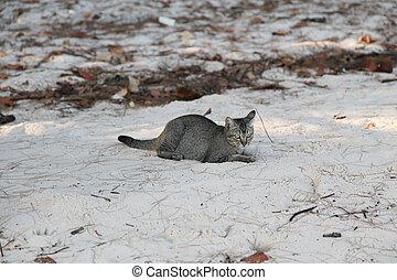 koh, spiaggia sabbia, sukorn, gatto