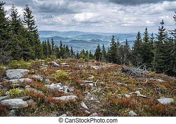 Kohut hill, Stolica mountains, Slovakia, forest calamity - ...