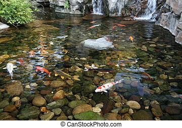 koi, étang, fish, japonaise