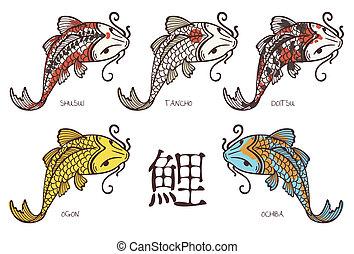Koi carp breeds classification, with japanese hieroglyph...