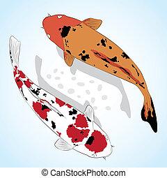 koi, carp., pez, saludo, vector, tarjeta