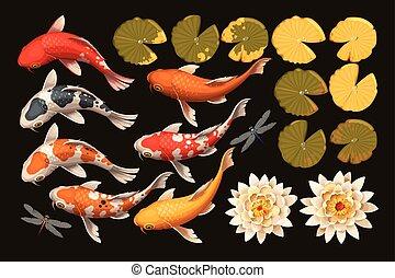 koi, loto, pez, conjunto