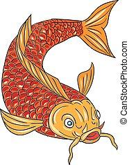 koi, nishikigoi, carpa, disegno, giù, fish, nuoto