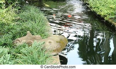 Koi or carp fish in garden pond