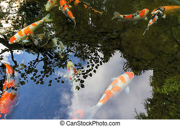 Koi pond stock photo images 3 866 koi pond royalty free for Koi pond you can swim in