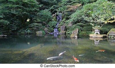 koi ryba, w, staw, z, wodospad