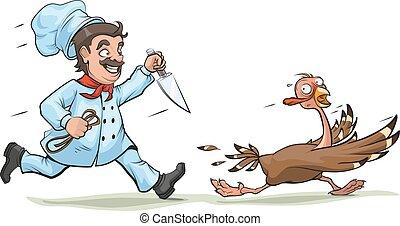 kok, indyk, nóż, ścigać
