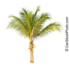 kokosnöt träd, isolerat, bakgrund., palm, vit