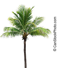 kokosnöt träd