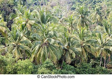 kokosnød håndflade, træer, ind, tropisk, jungle