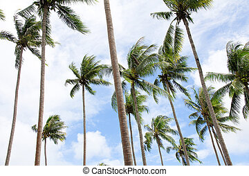kokosnød håndflade, træer