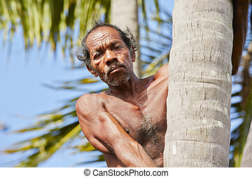 kokosnød, mand
