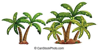 kokosnød, træer