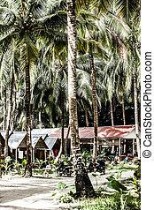 kokosnød, træer, ind, den, karibisk