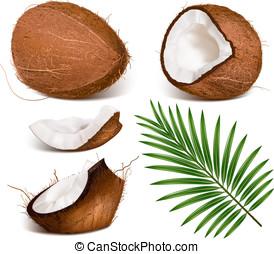 kokosnüsse, mit, leaves.