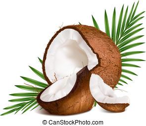 kokosnoten, leaves.