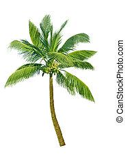 kokosnotenboom