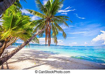 kokosnuß- baum, handfläche, weißer strand, sandig