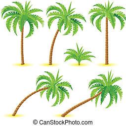 kokosnuß- palmen