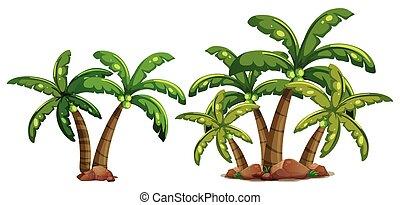 kokosnuss, bäume