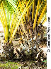 kokosnuss, bäume, in, der, karibisch
