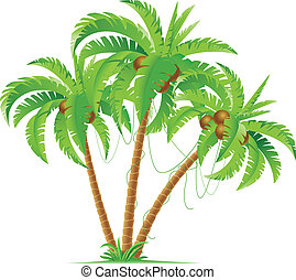 kokosnuss, drei, handflächen