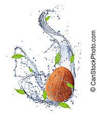kokosnuss, in, wasser, spritzen, freigestellt, weiß, hintergrund
