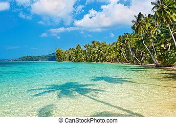 kokosnuss, sandstrand, handflächen