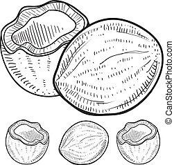kokosnuss, skizze