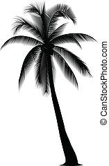 kokosowe drzewo, sylwetkowy