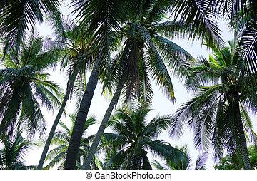 kokospalm, perspectief, bomen, aanzicht