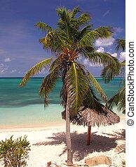 kokospalm, strand