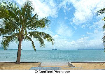 kokospalm, zee