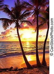 kokospalme, bäume, gegen, bunte, sonnenuntergang, in, saona, island., karibisches meer, dominikanische republik