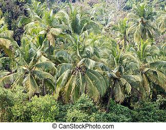 kokospalme, bäume, in, tropische , dschungel
