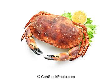 kokt, röd, krabba