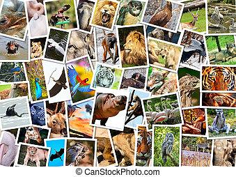 koláž, neobvyklý, živočichy