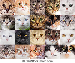 koláž, o, neobvyklý, šikovný, devítiocasá kočka