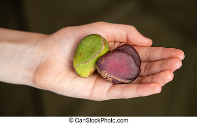 Kola Nuts in Hand