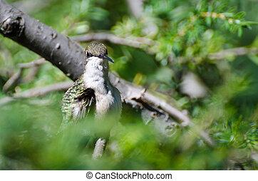 kolibri, gyártás, szem kontaktlencse