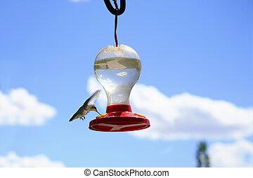 kolibrie, op, de, blauwe hemel