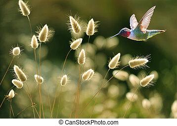 kolibrie, op, groen gras, zomer, achtergrond