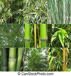 kollázs, bambusz