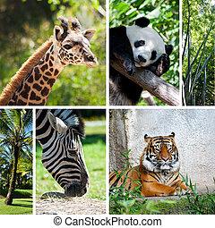 kollázs, fénykép, hat, állatkert
