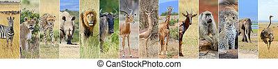 kollázs, közül, afrikai, kicsapongó élet, állat