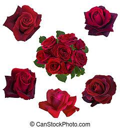 kollázs, közül, piros rózsa